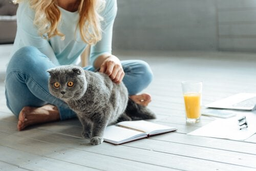 Woman sitting on the floor petting a cat: toxoplasmosis in cats.