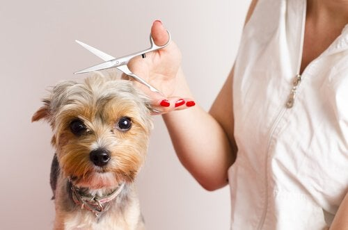 Tips for Dogs that Have a Bad Time at the Groomers