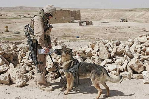 Stories of Friendship between Soldiers and Dogs in Afghanistan