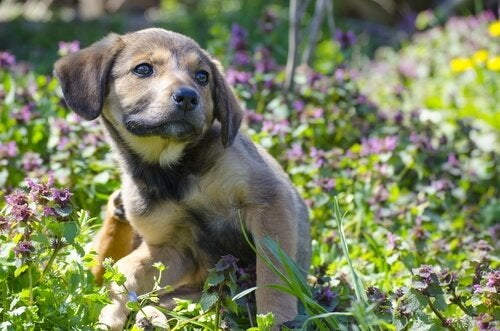 puppy scratching itself among grass and flowers
