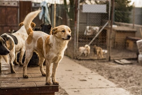 Dogs living in an animal shelter: adopt a pet.