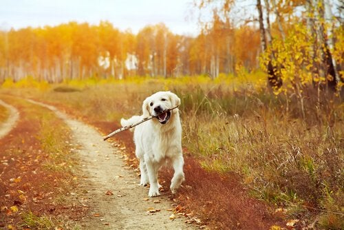 dog with stick during walk time