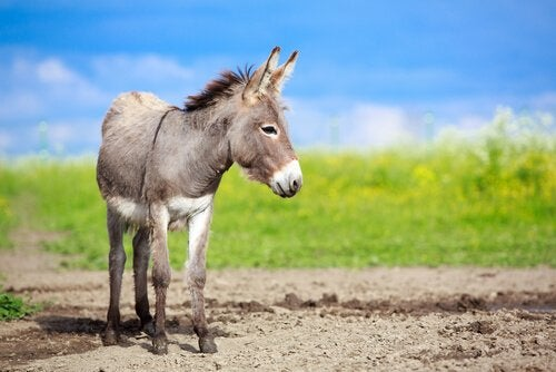 A donkey standing in a field