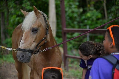A horse being used in animal-assisted therapy