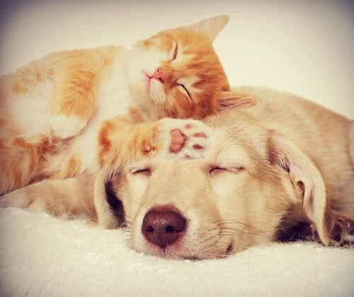A cat and dog sleeping together
