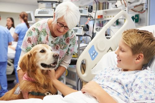 Dog visiting a boy in the hospital