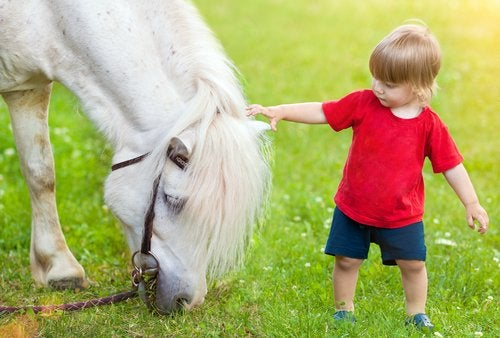 A toddler petting a pony