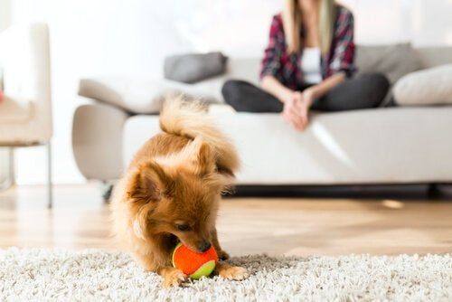 Basic Aspects of Canine Behavior