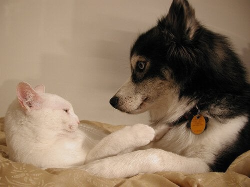 Using Contraceptives for Dogs and Cats