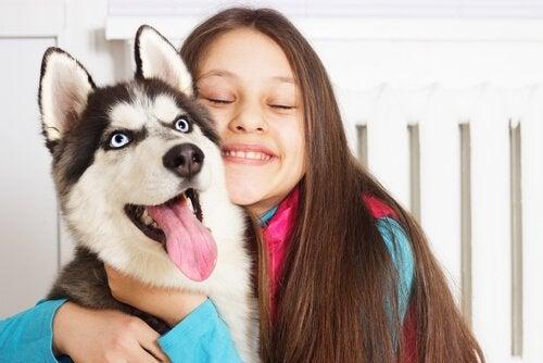 Young girl hugging a Siberian Husky