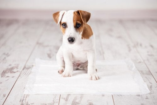Puppy getting potty trained