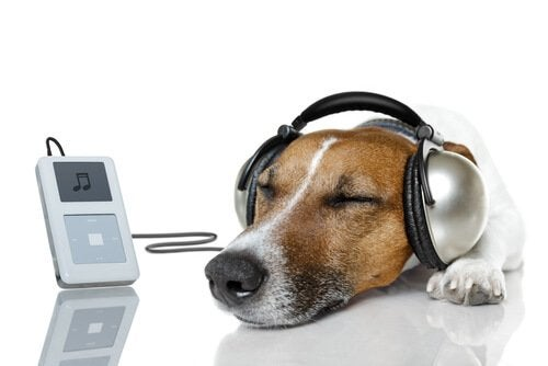 Dog listening to an iPod