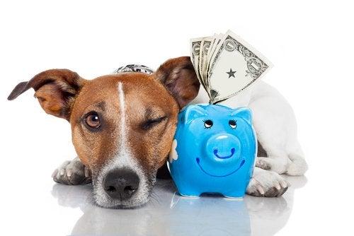 Dog next to a piggy bank