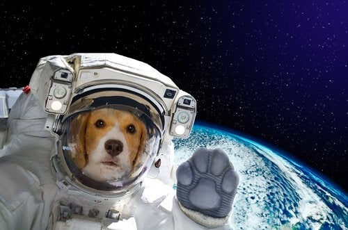 Dog wearing a space suit
