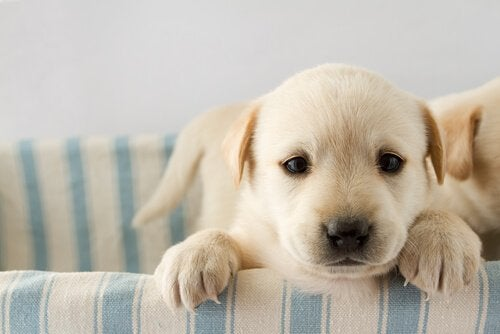puppy in a bed