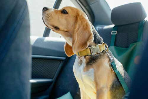 Car Safety Measures for Dogs