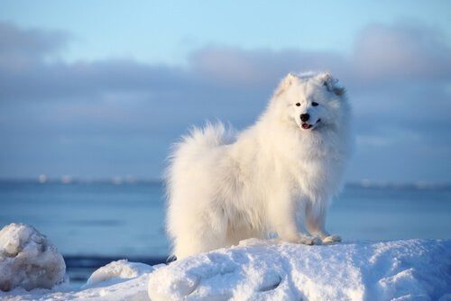 5 Nordic Dog Breeds My Animals