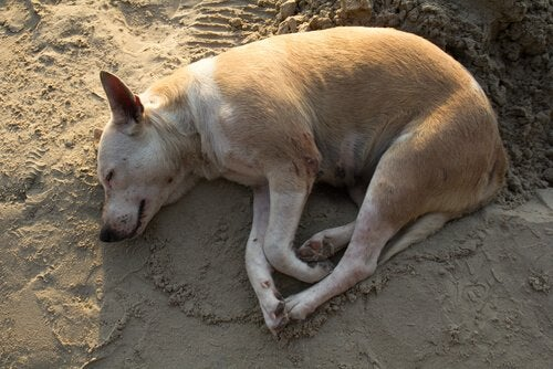 Dog sleeping on top of the sand