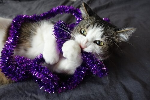 A cat chewing on a decoration