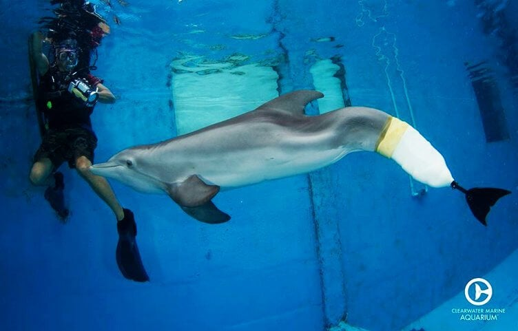 Dolphin with prostheses