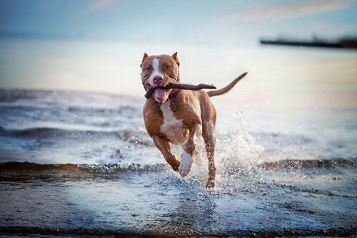 Favorite Games And Activities For Dogs