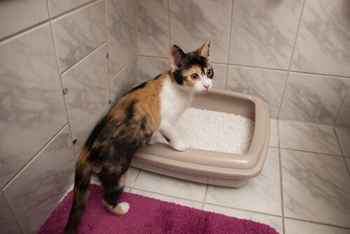 KItten perched on litter box