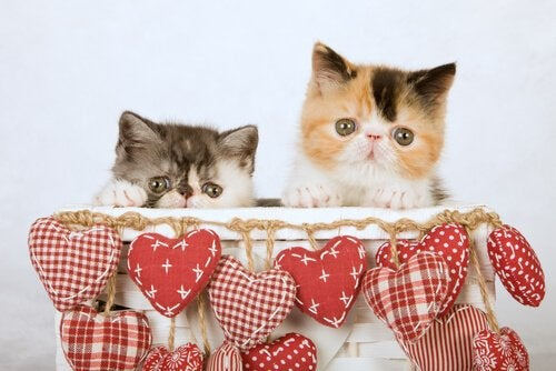 Two cats in a decorated box