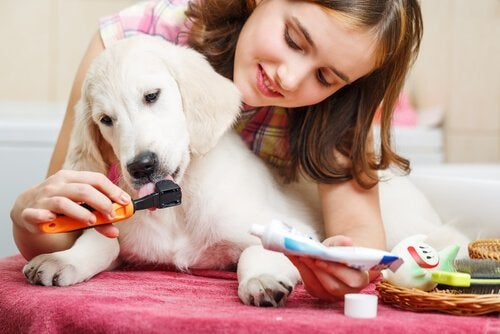 Girl having her dog taste the toothpaste on a toothbrush