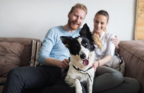 Millennials on the couch with their dog