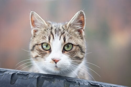 Why Your Cat Stares at You