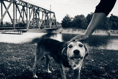The Last Dogs Of Chernobyl