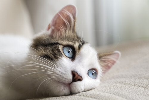 Blue-eyed cat laying on a bed
