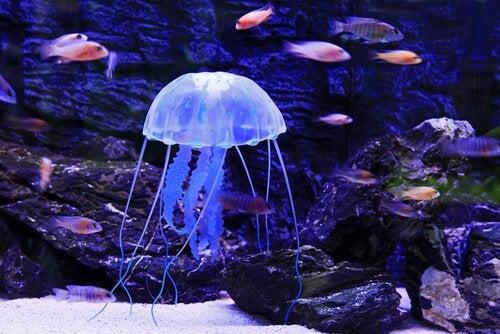 Jellyfish swimming with fish