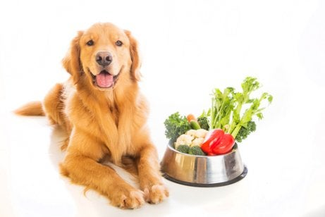A dog next to a bowl of vegetable