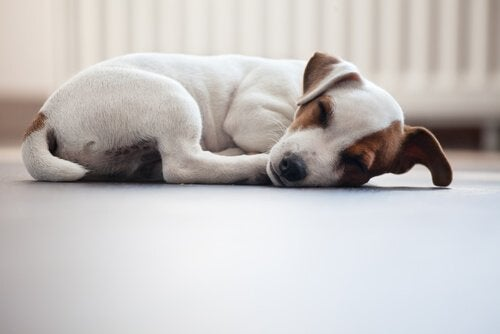 A puppy snuggled up on the floor.