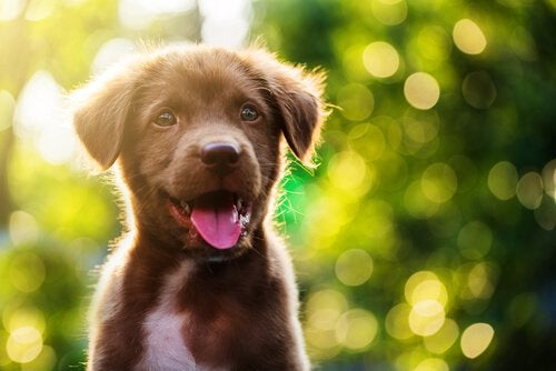 Beautiful puppy smiling