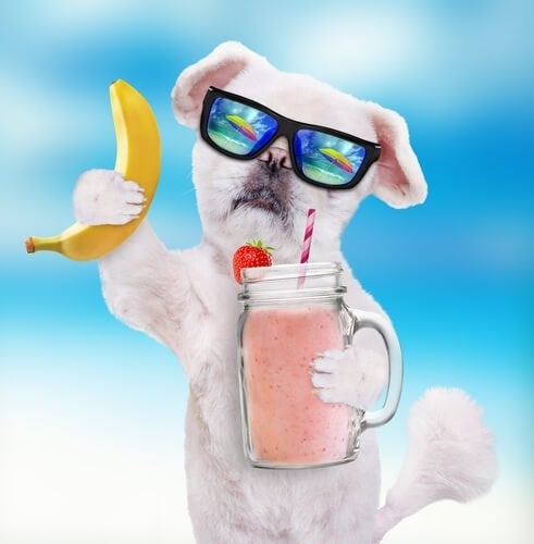 A dog with sunglasses, a smoothie and a banana