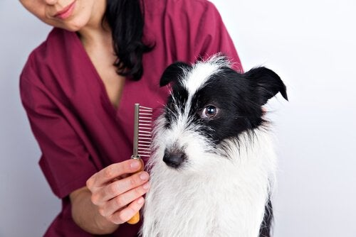 Trim your dog's fur with a brush