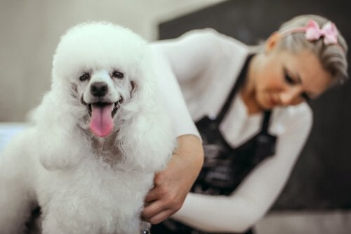 trimming your dog's fur at home