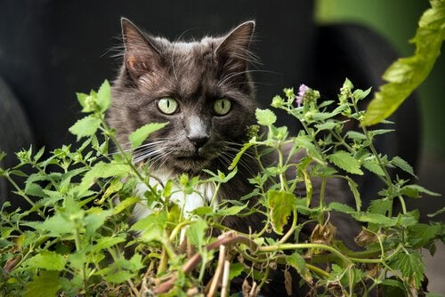 Cat behind a plant