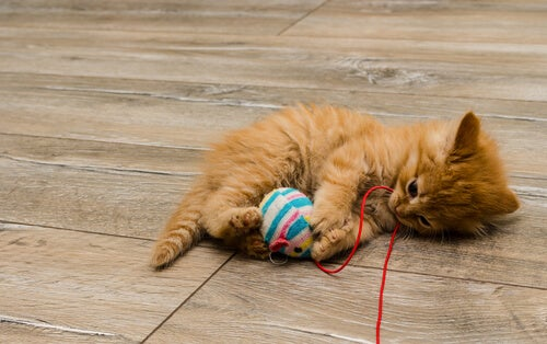 Kitten happily playing with a toy mouse