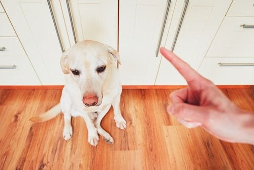 Dog getting scolded
