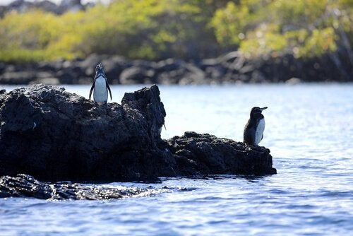 Penguins on some rocks.