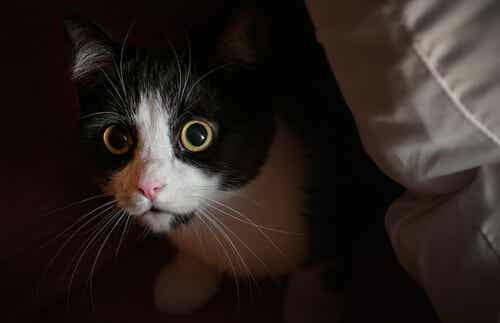 The Myth About Cats' Curiosity