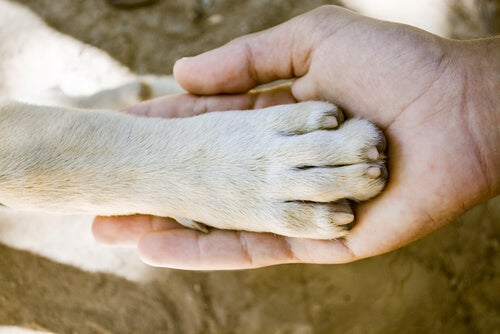 What dog breed has the strongest paws?