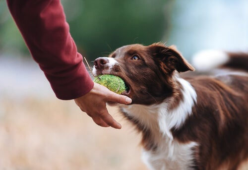 Tips To Keep Your Dog From Being Possessive Over His Toys