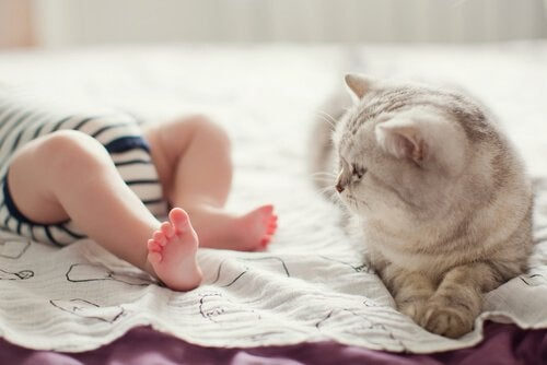 Cat at a baby's feet