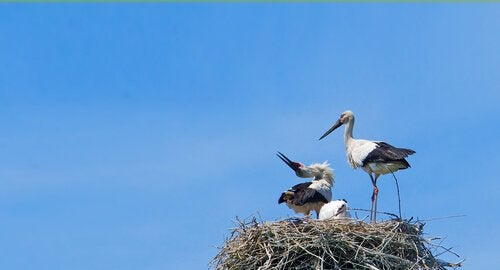 Two storks that are in love