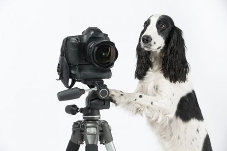 A dog standing next to a tripod looking like he is taking a picture