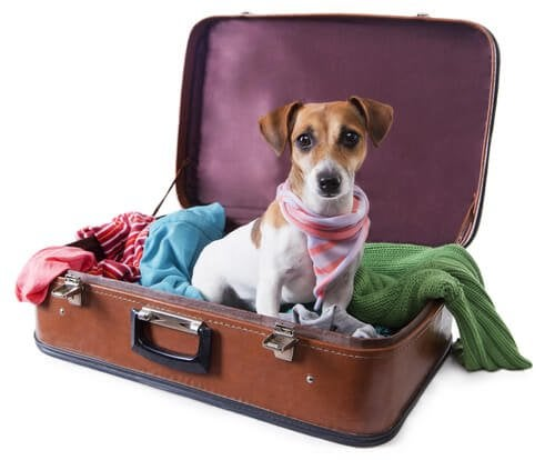 A dog lying inside an opened suitcase